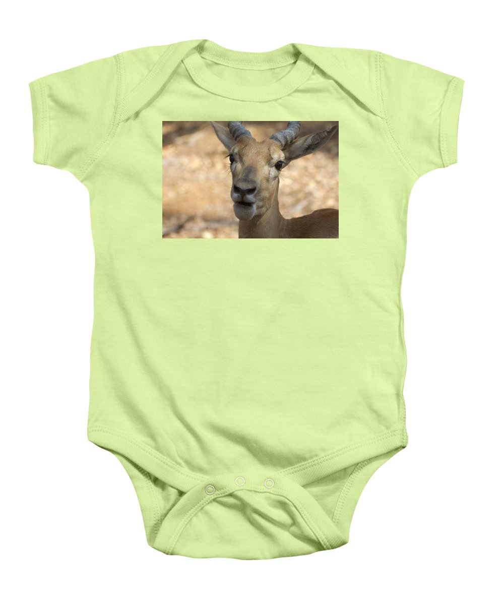Antelope Baby Onesie featuring the photograph Surprise by Douglas Barnard