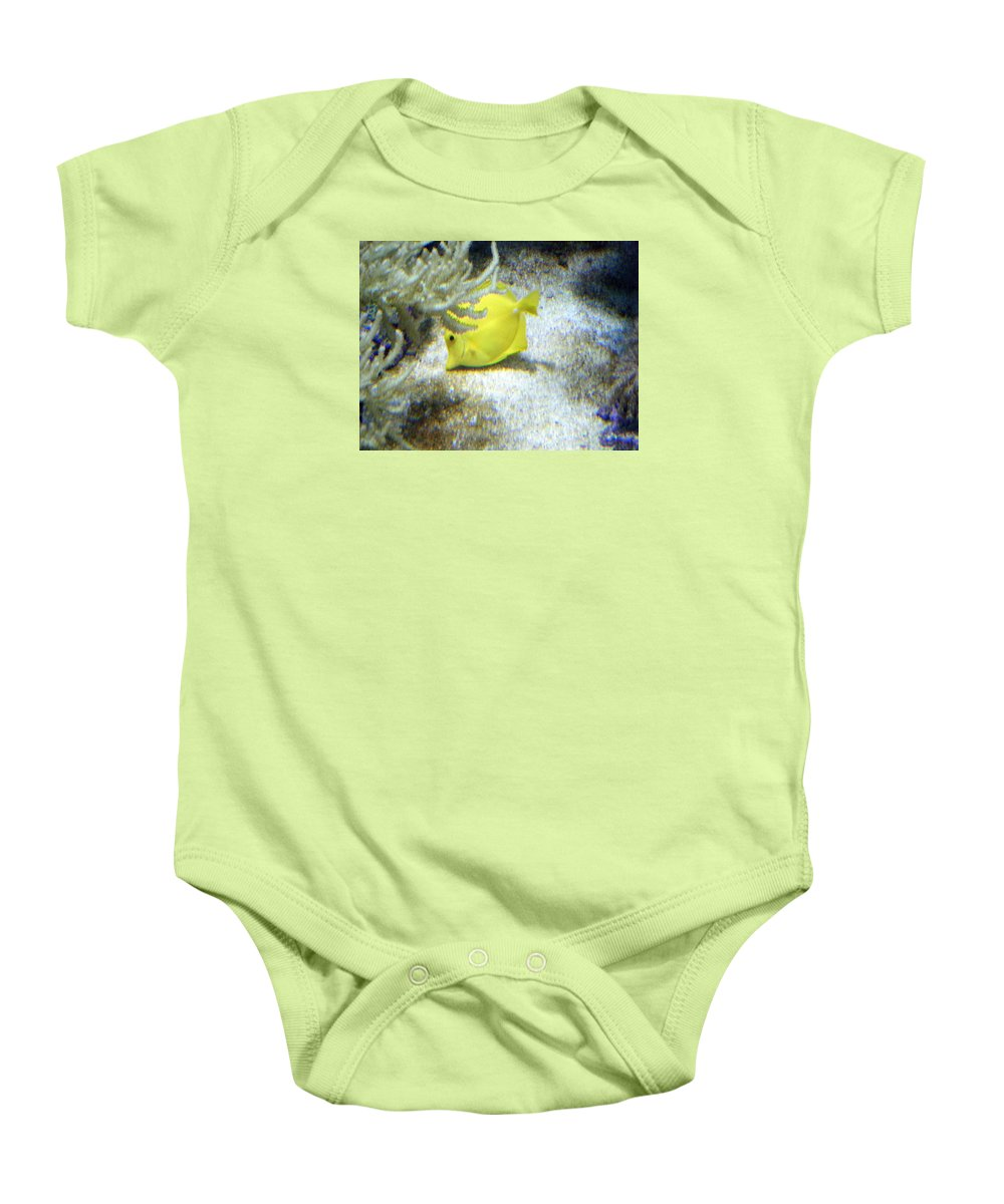 Angelfish Baby Onesie featuring the photograph Yellow Angelfish by April Patterson