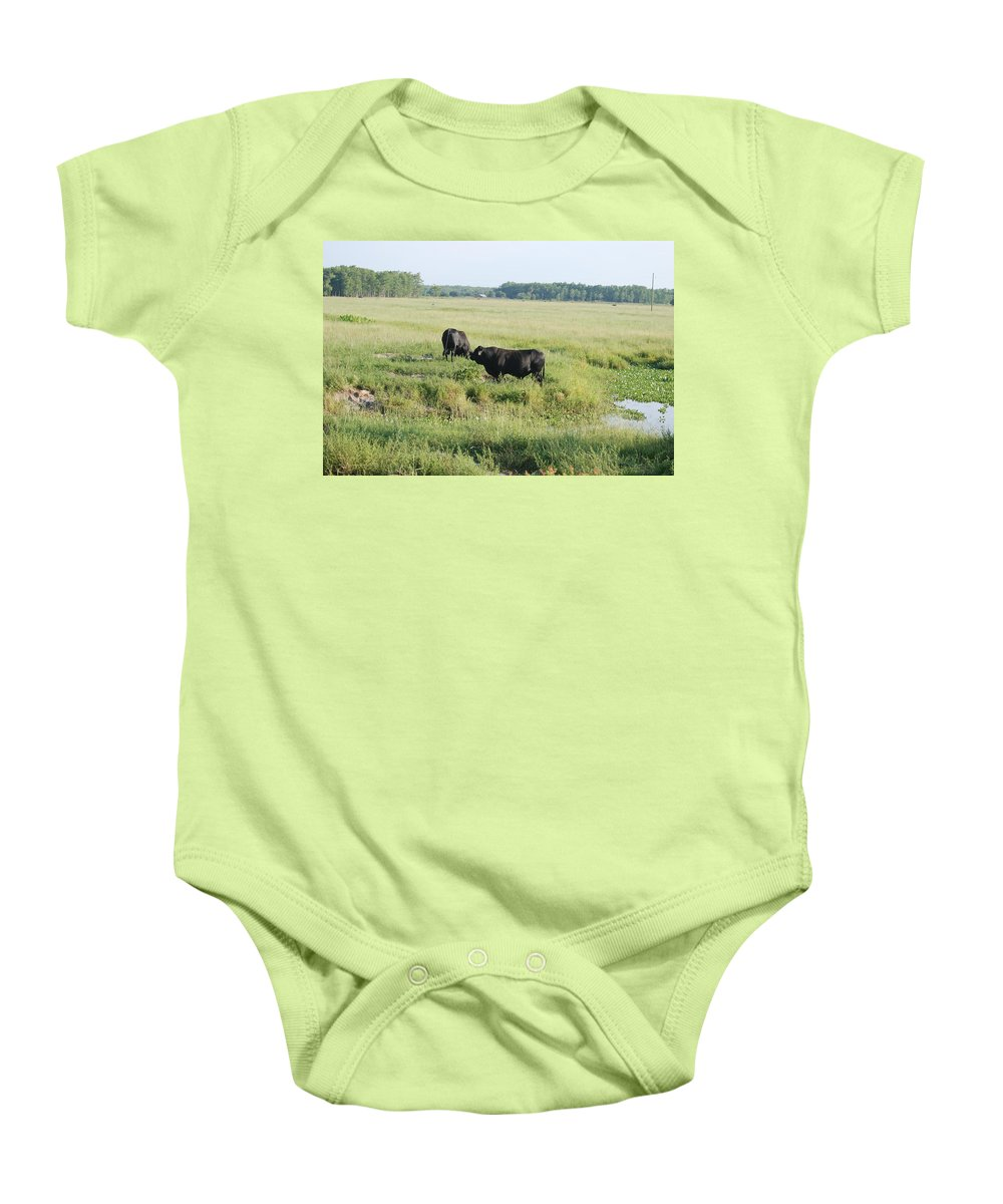 Cows Baby Onesie featuring the photograph American Cattle by Rob Hans