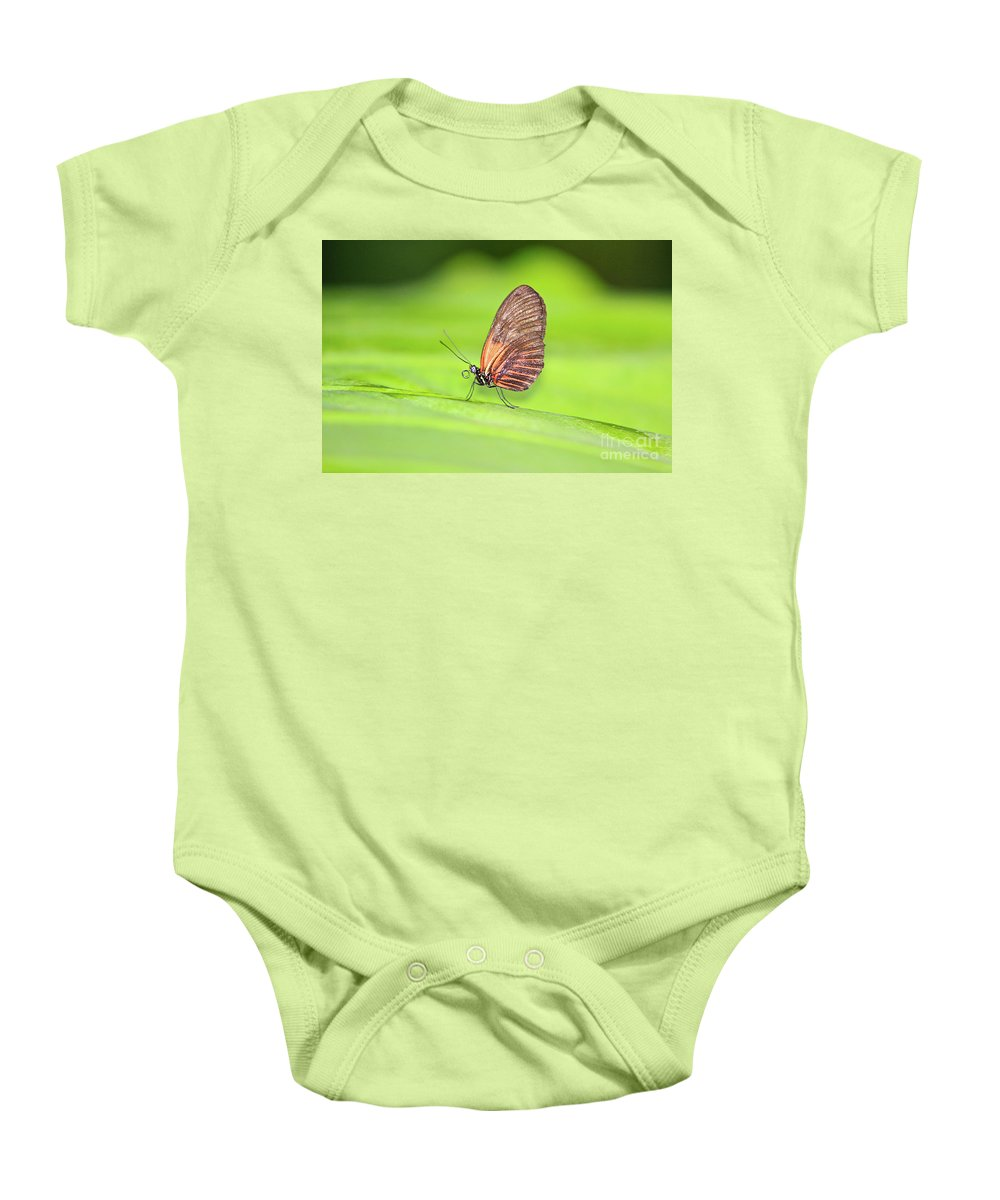 Central America Baby Onesie featuring the photograph Banded Orange Butterfly by Robert Pearson