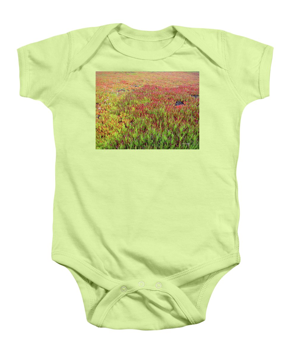 Ice Plant Baby Onesie featuring the photograph Changing Landscape II by Donna Blackhall