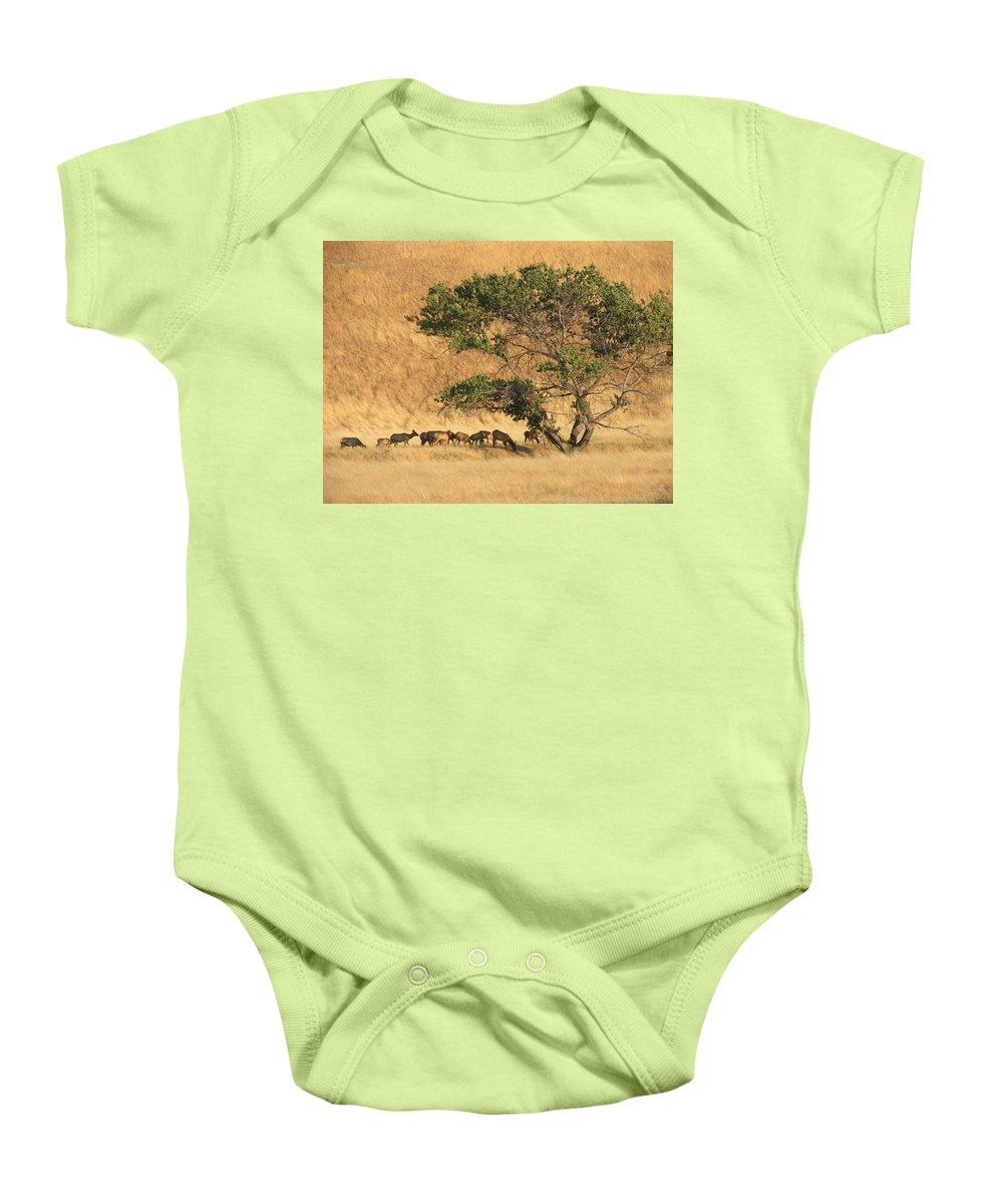 Landscapes Baby Onesie featuring the photograph Elk Under Tree by Karen W Meyer