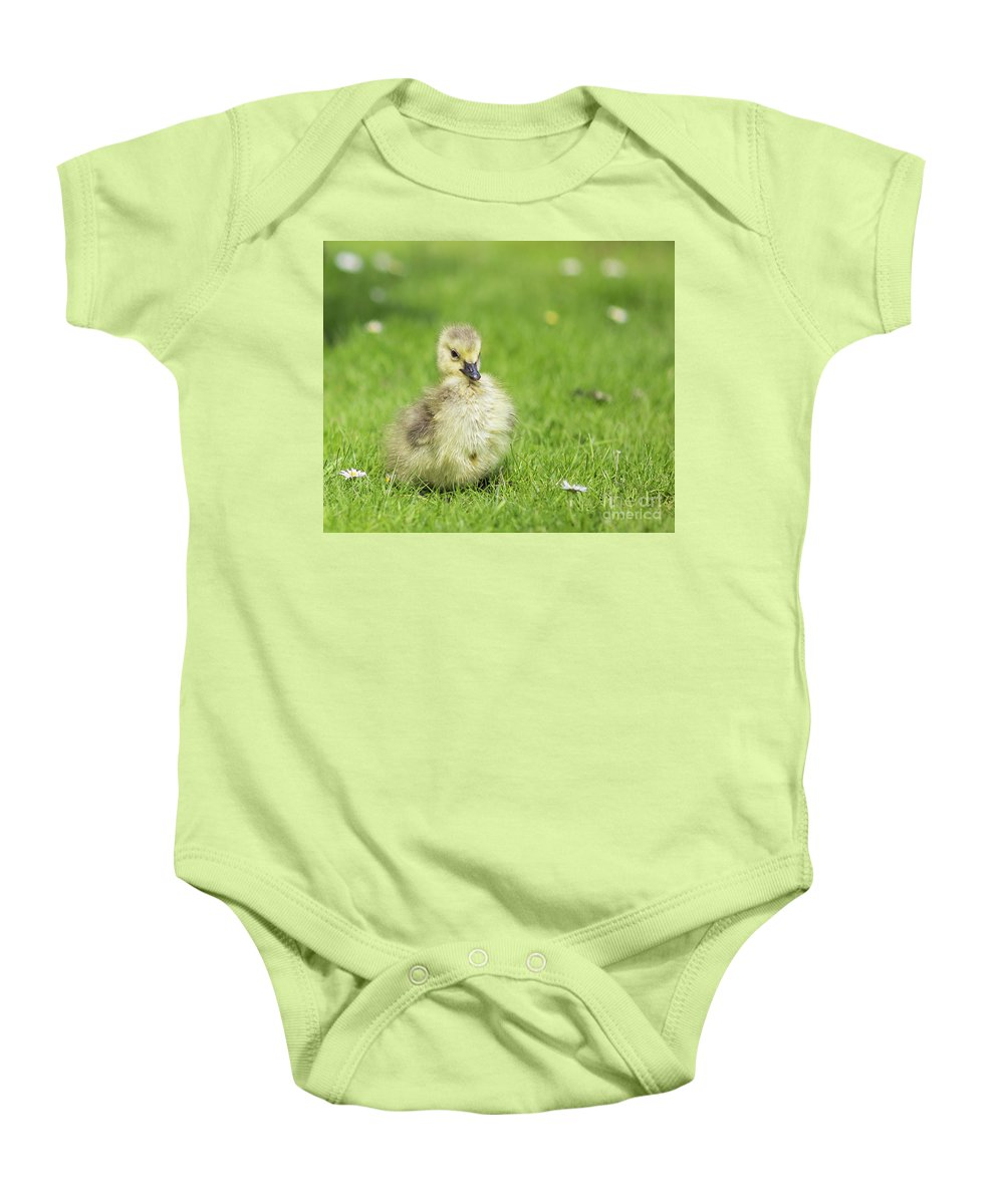 Gosling Baby Onesie featuring the photograph Gosling by Eva Lechner