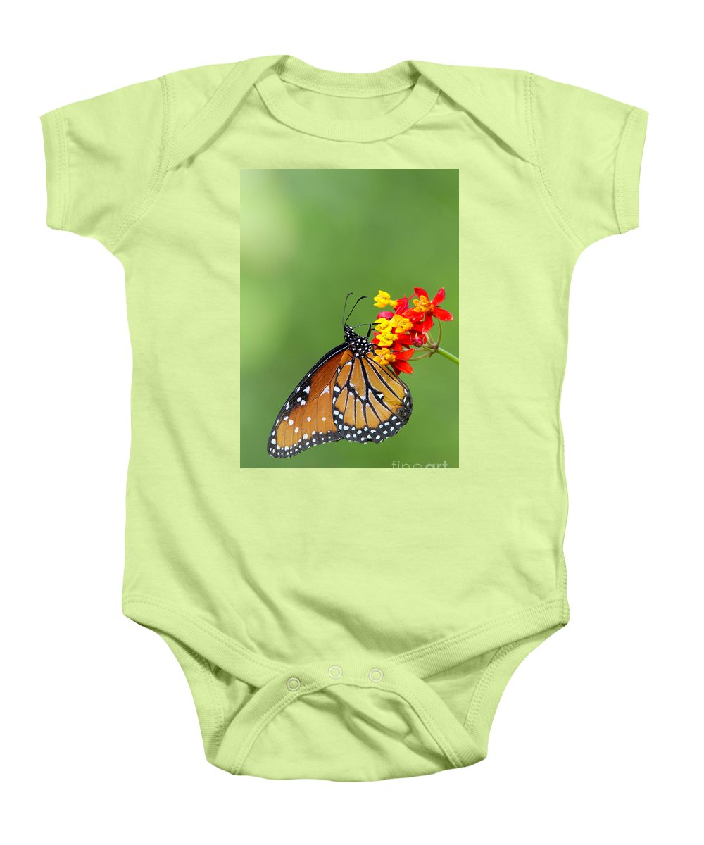 Queen Butterfly Baby Onesie featuring the photograph Queen Hanging Around by Bryan Keil