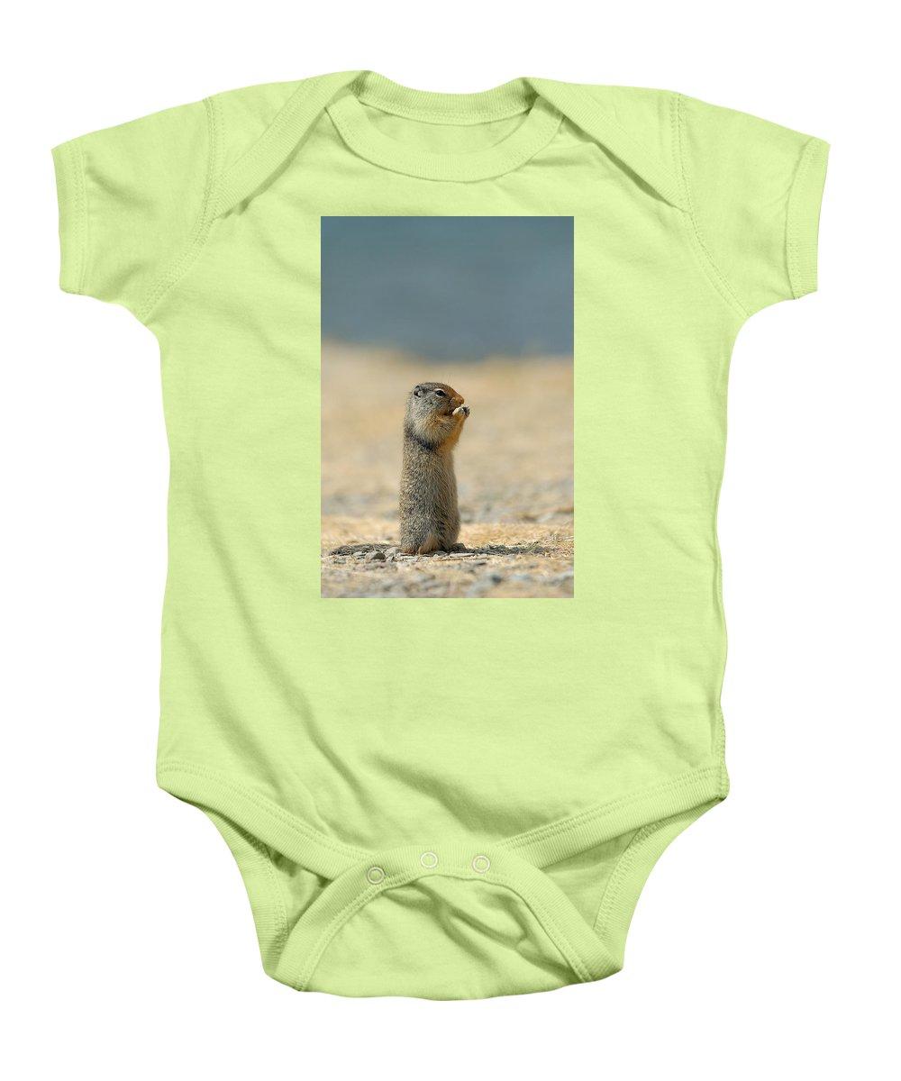 Prairie Dog Baby Onesie featuring the photograph Prairie Dog by Sebastian Musial