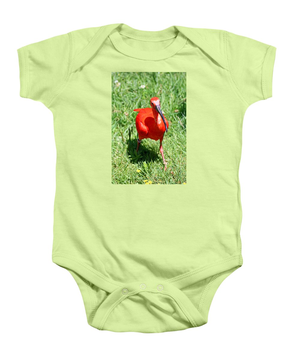 Red Ibis Baby Onesie featuring the photograph Red Ibis by Alex Antoine