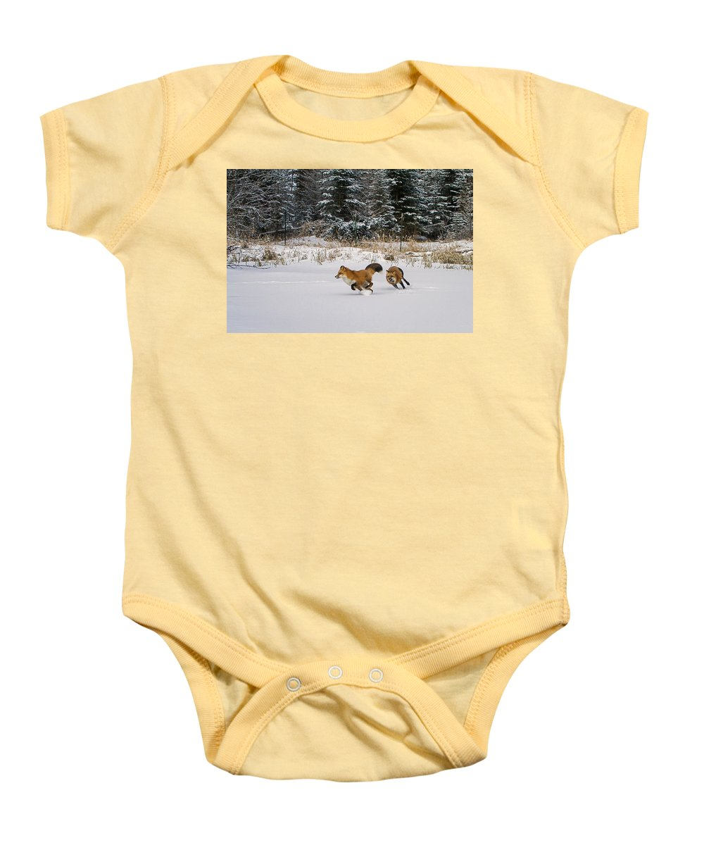 Red Fox Baby Onesie featuring the photograph A Morning Run by Jack Bell