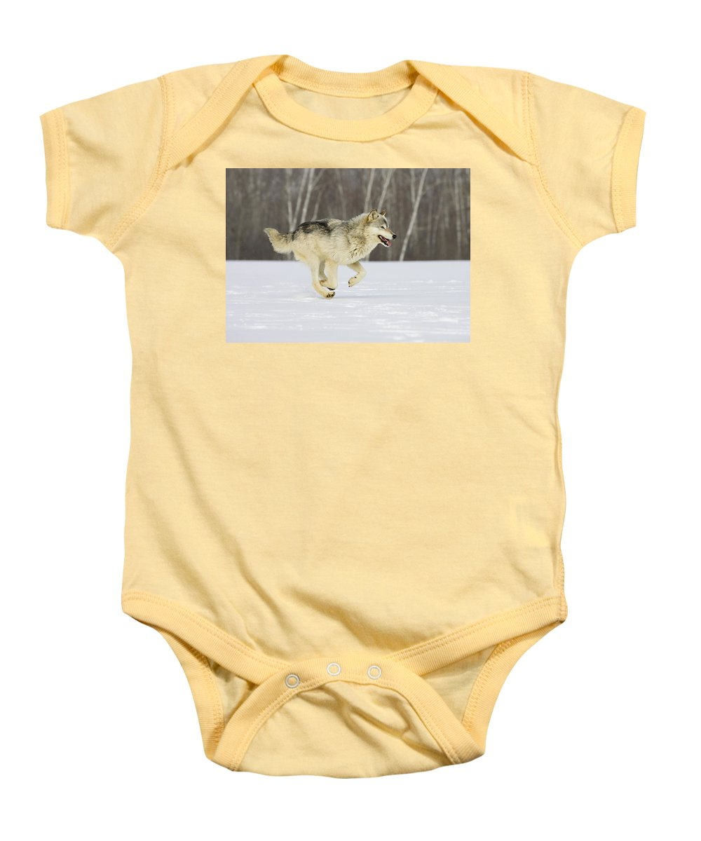 Wolf Baby Onesie featuring the photograph On The Trot by Jack Milchanowski
