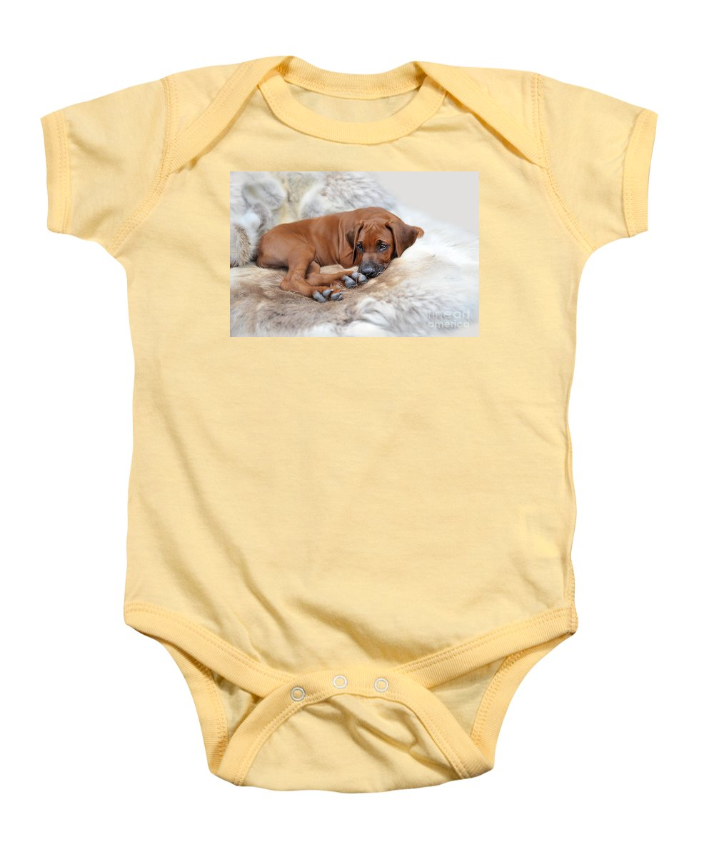 Dog Baby Onesie featuring the photograph Ridgy Daydream by Lena Lottsfeldt Vincken