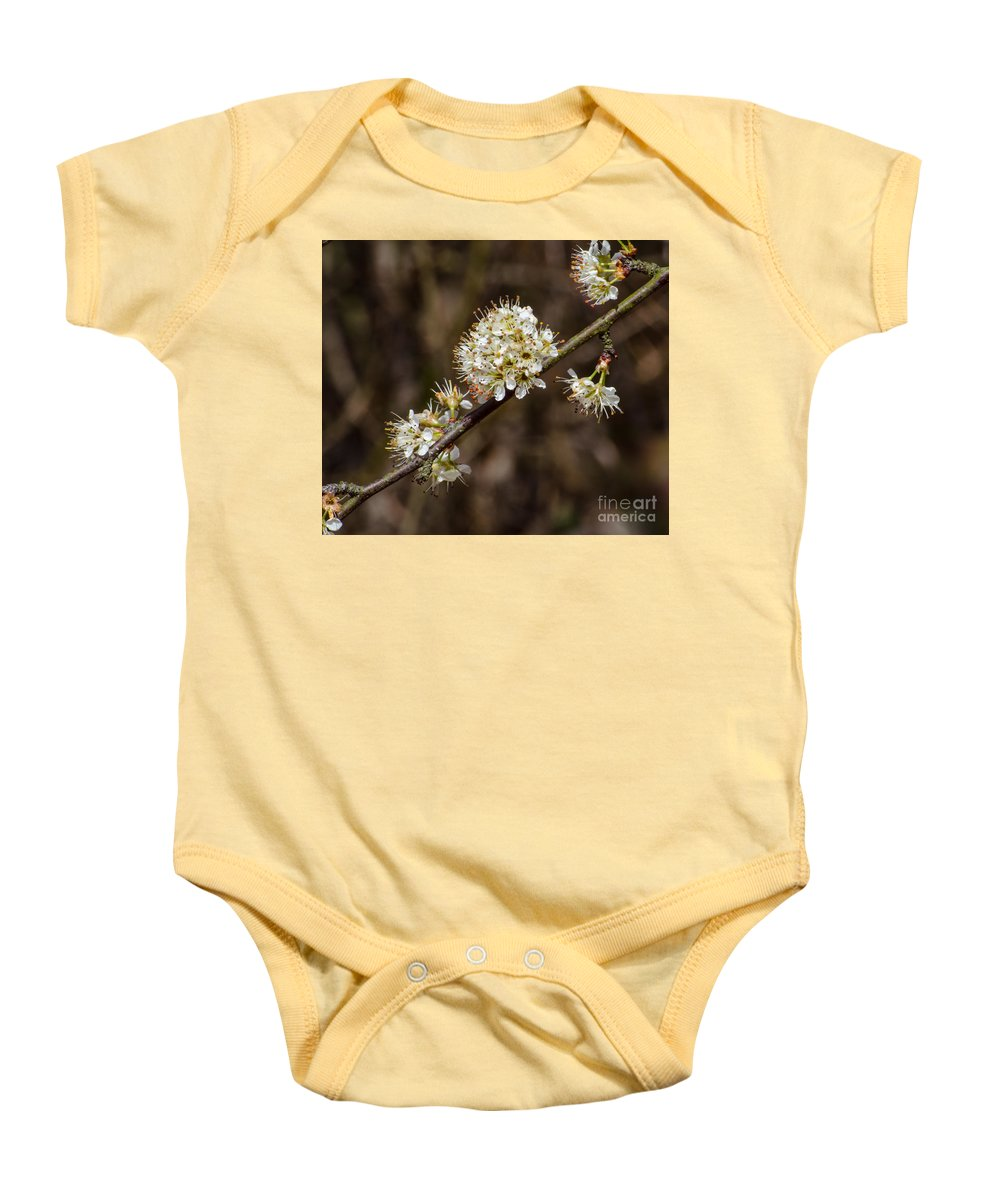 Tree Baby Onesie featuring the photograph Wild Pear by Donna Brown