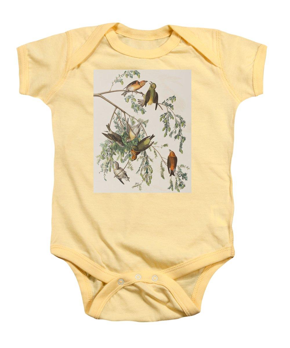 Crossbill Baby Onesies