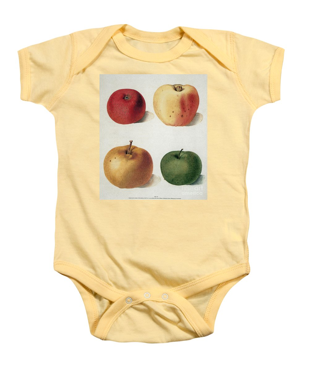 19th Century Baby Onesie featuring the photograph Apples by Granger