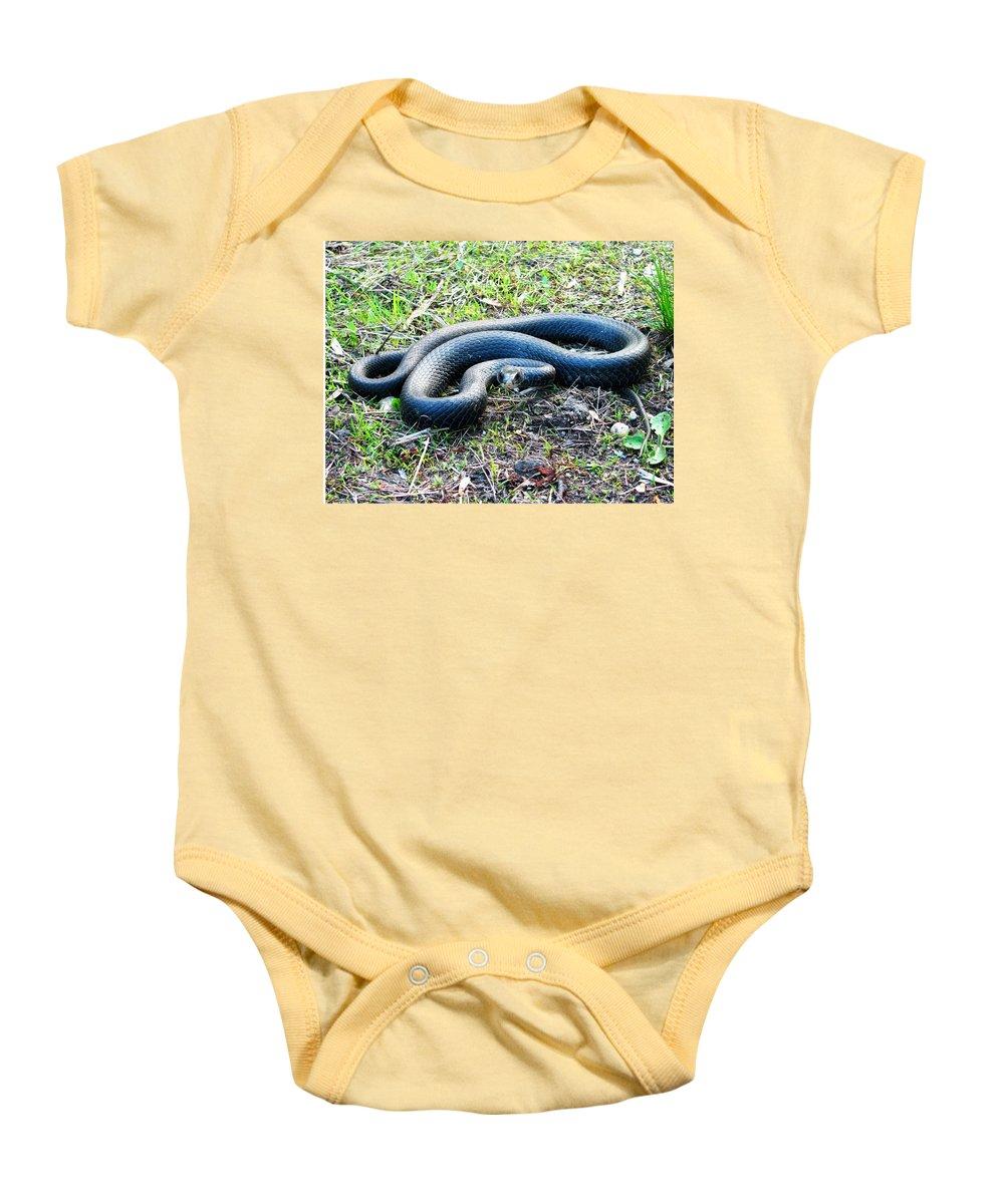 Black Racer Photograph Black Racer Canvas Prints Nonvenomous Snake Reptile Forest Ecology Biodiversity Nature Herpetology Serpent Baby Onesie featuring the photograph Black Racer by Joshua Bales