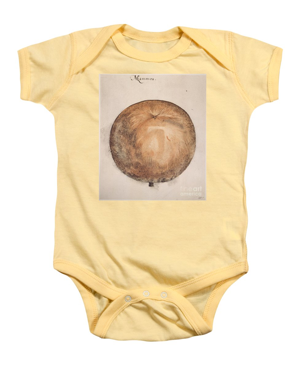 1585 Baby Onesie featuring the photograph Botany: Mammee, 1585 by Granger