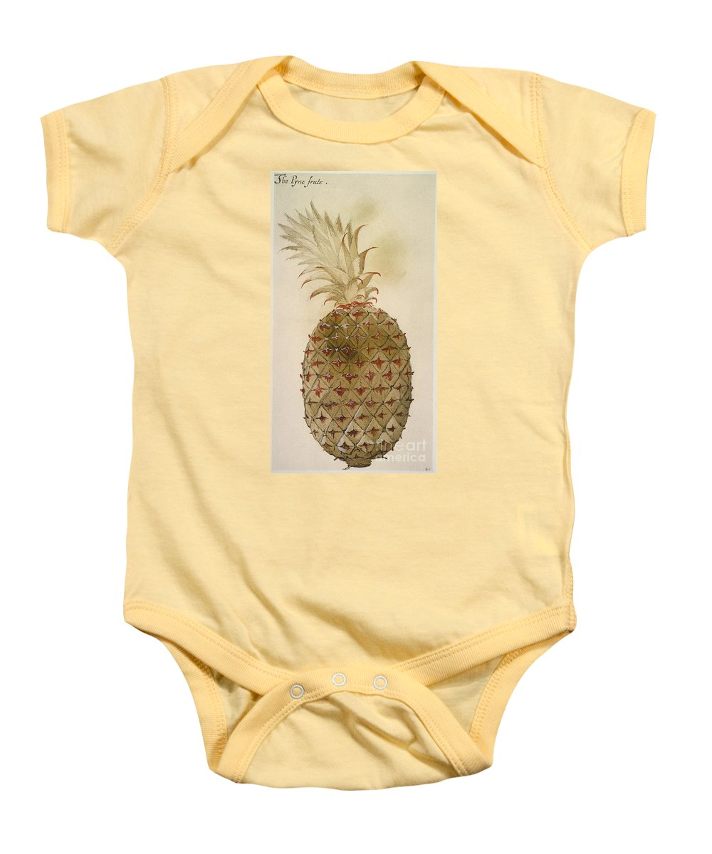 1585 Baby Onesie featuring the photograph Botany: Pineapple, 1585 by Granger