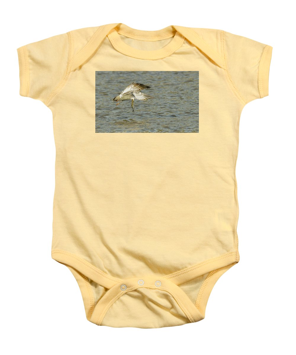 Gull Baby Onesie featuring the photograph Fishing by Robert Smice