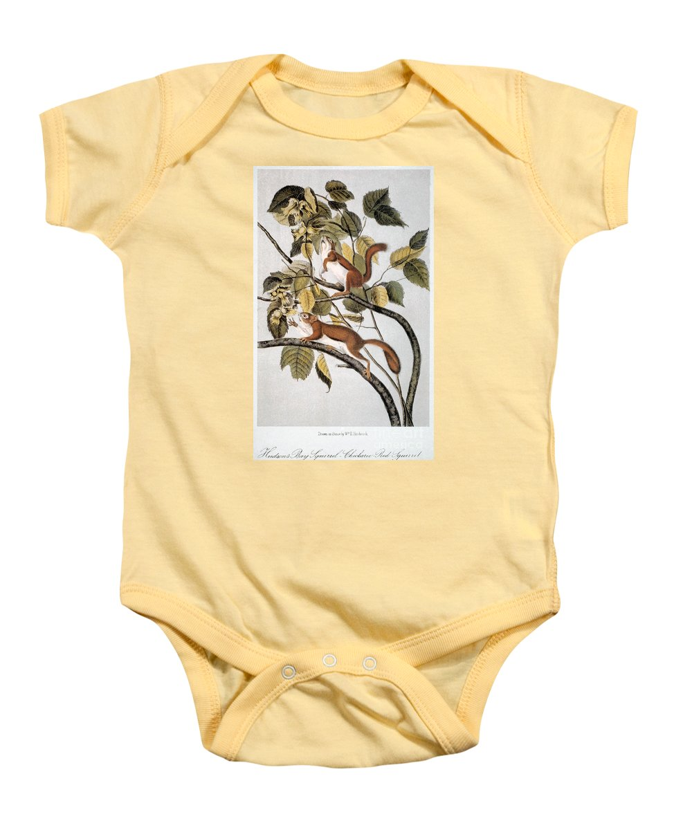 1846 Baby Onesie featuring the photograph Hudsons Bay Squirrel by Granger