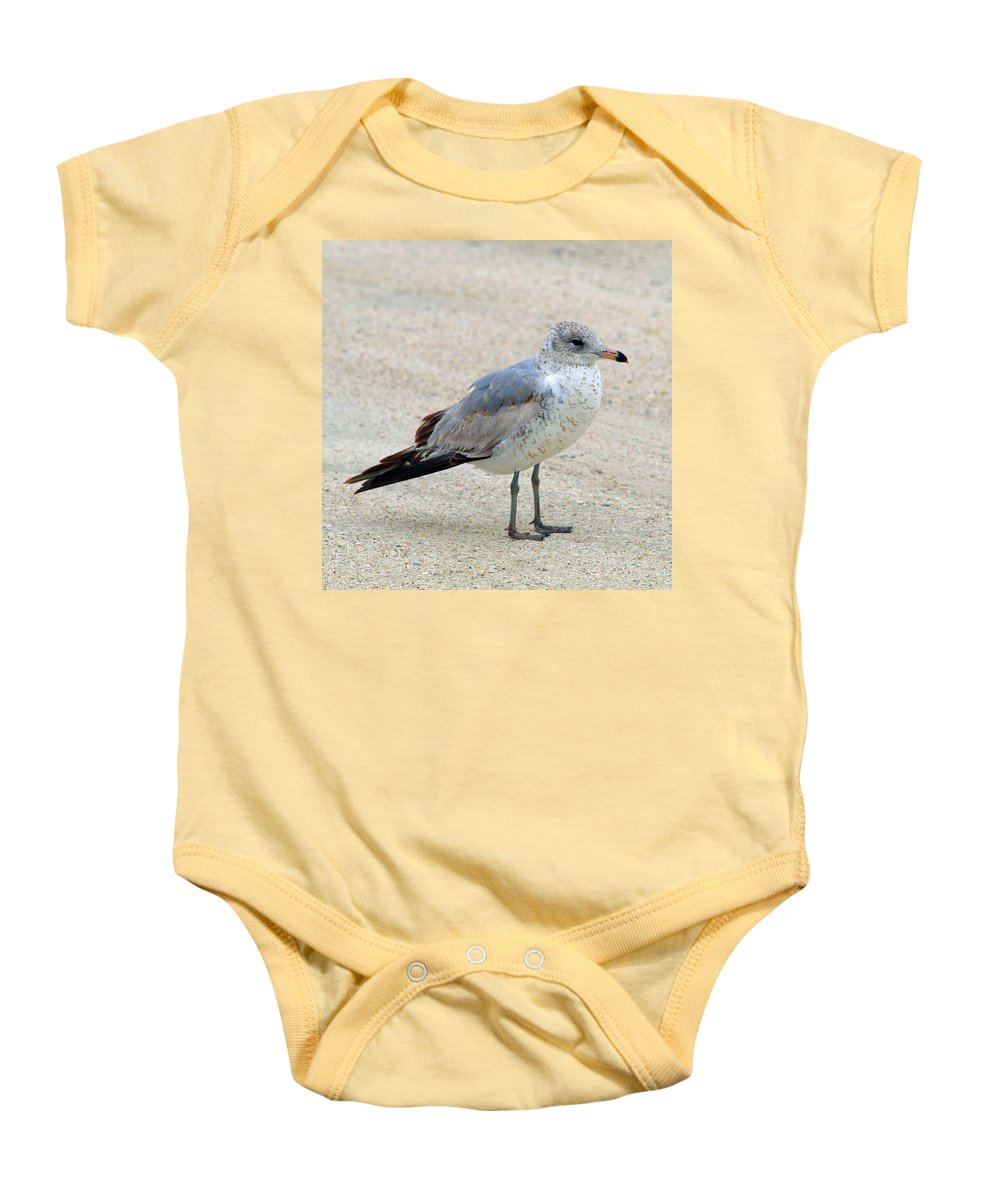 Laughing; Gull; Seagull; Bird; Waterfowl; Seashore; Sebastian; Inlet; Flying; Florida; Larus; Atrici Baby Onesie featuring the photograph Laughing Gull by Allan Hughes