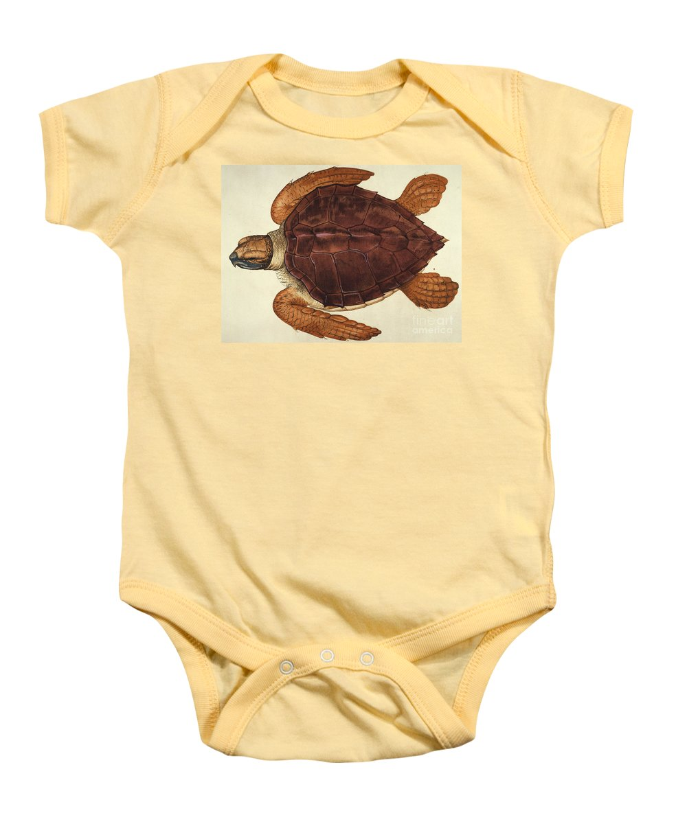 1585 Baby Onesie featuring the photograph Loggerhead Turtle, 1585 by Granger