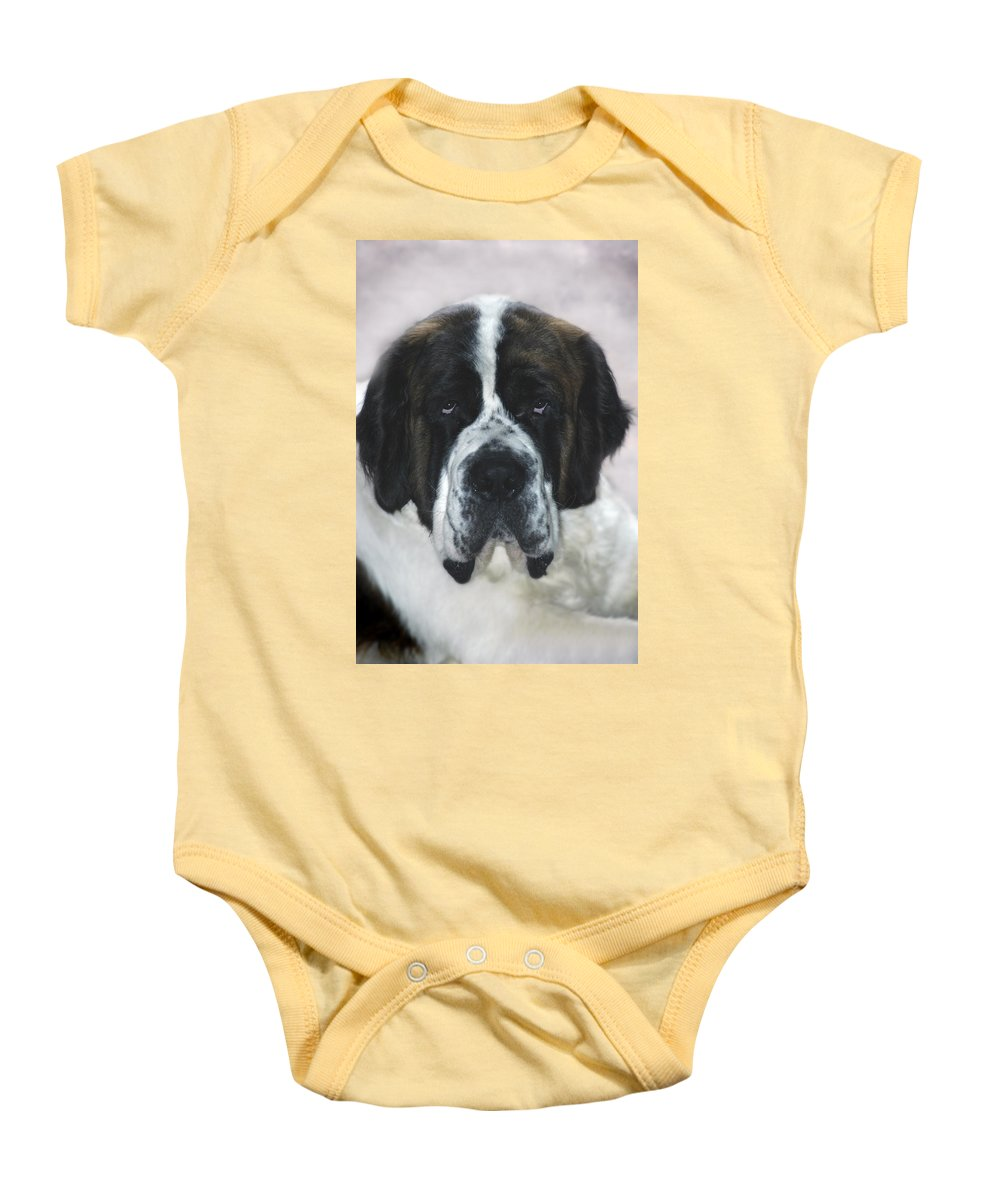 St Bernard Baby Onesie featuring the photograph Saint by D'Arcy Evans