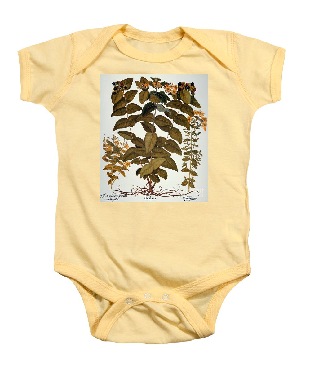 1613 Baby Onesie featuring the photograph Saint-johns-wort, 1613 by Granger