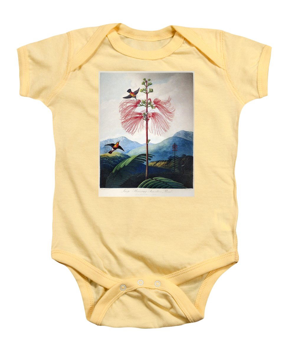 1799 Baby Onesie featuring the photograph Thornton: Sensitive Plant by Granger
