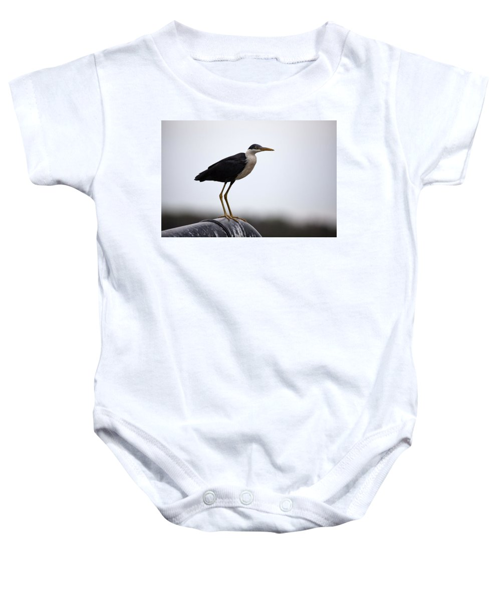 Pied-heron Baby Onesie featuring the photograph Pipe Dream by Douglas Barnard