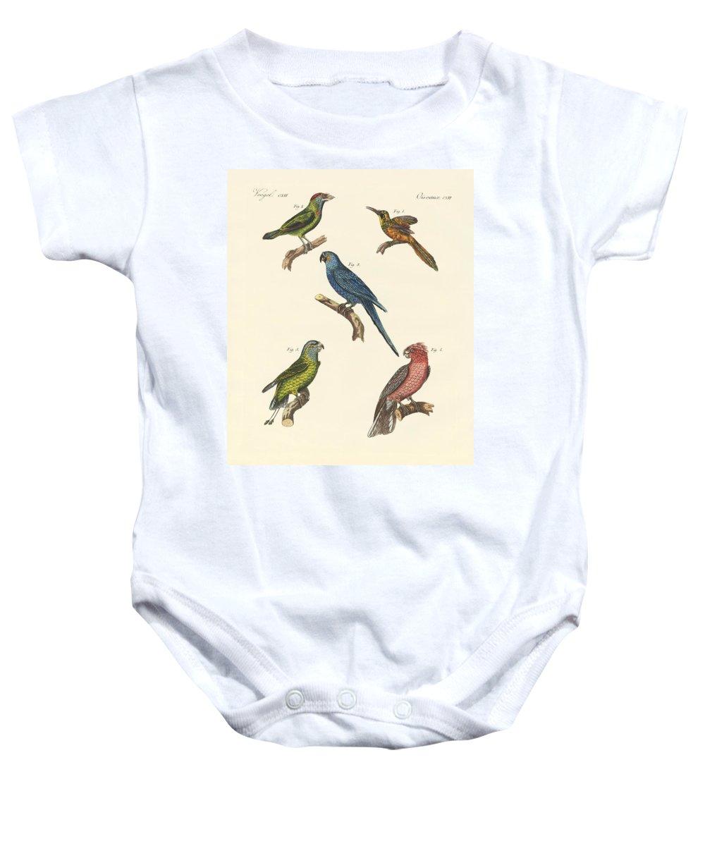 Bertuch Baby Onesie featuring the drawing Strange Climbing Birds by Splendid Art Prints