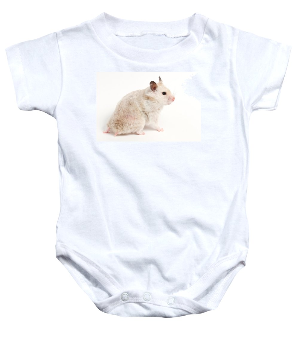 Hamster Portrait Baby Onesie featuring the photograph Syrian Hamster Mesocricetus Auratus by David Kenny