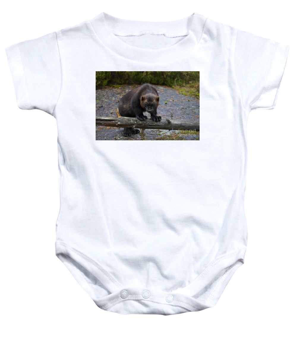 Wolverine Baby Onesie featuring the photograph 121213p346 by Arterra Picture Library