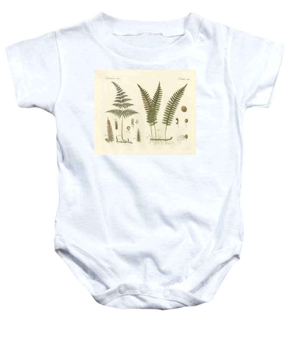 Bertuch Baby Onesie featuring the drawing Strange Grasses by Splendid Art Prints