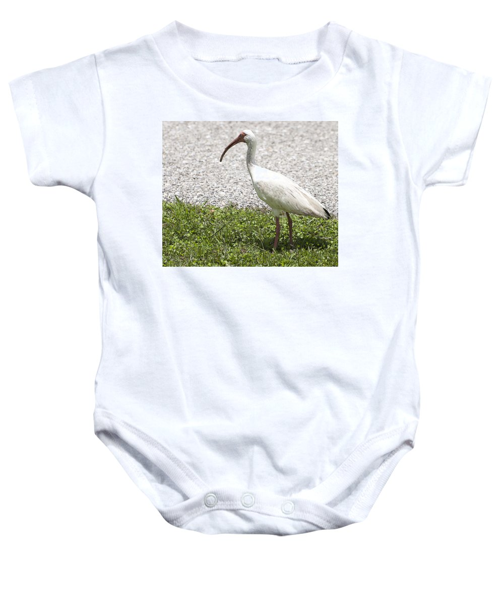 Horizontal Baby Onesie featuring the photograph American White Ibis Poster Look by Sally Rockefeller