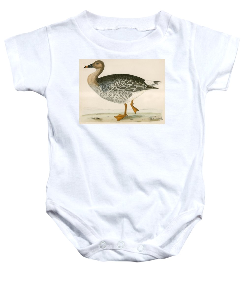 Birds Baby Onesie featuring the photograph Bean Goose by Beverley R. Morris