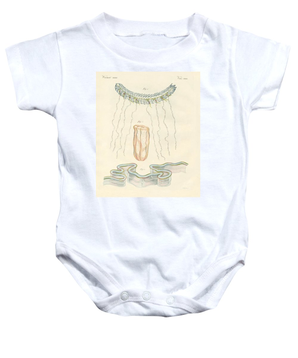 Bertuch Baby Onesie featuring the drawing Beautiful Comb Jellies by Splendid Art Prints