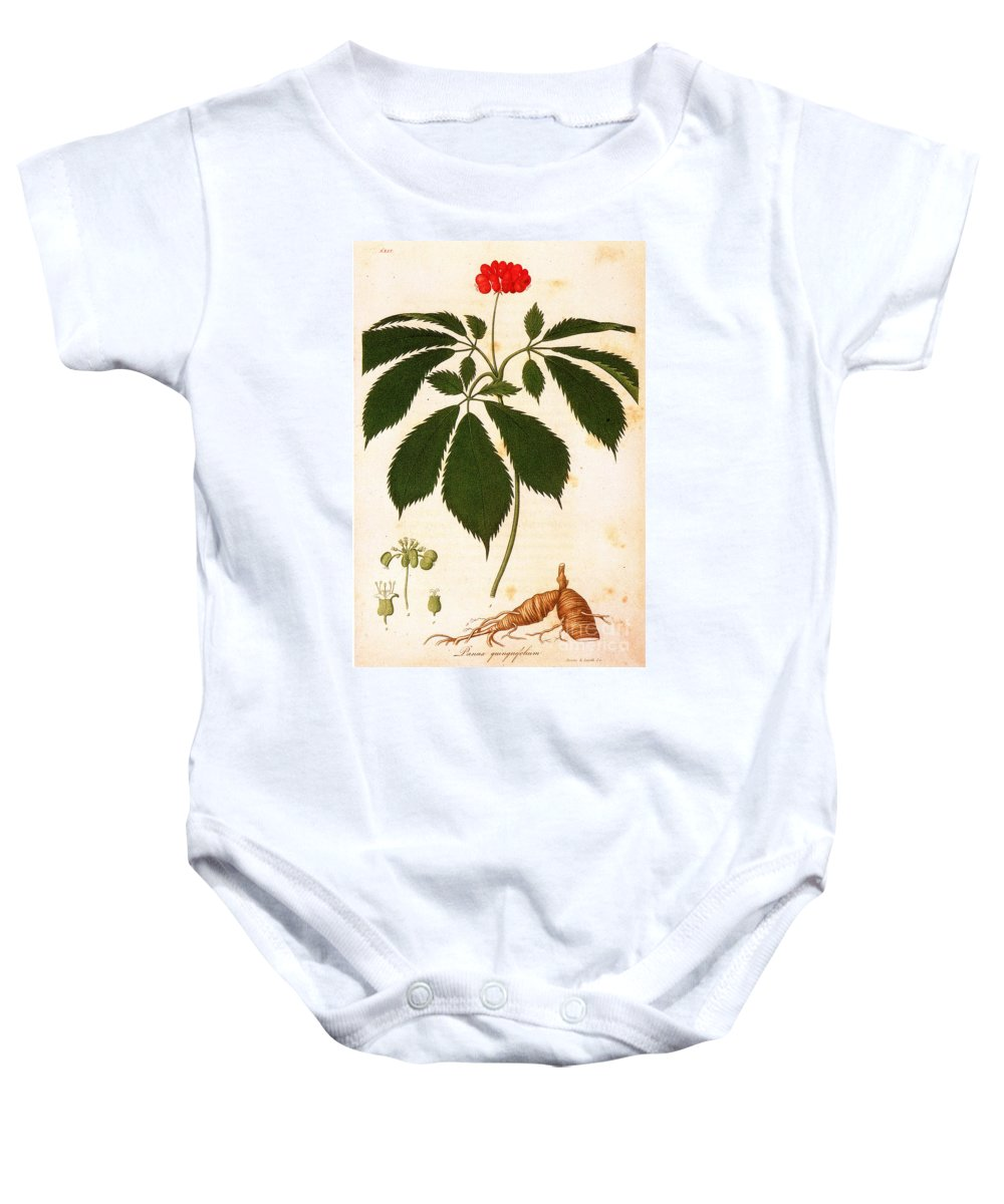 1810s Baby Onesie featuring the photograph Botany: Ginseng by Granger