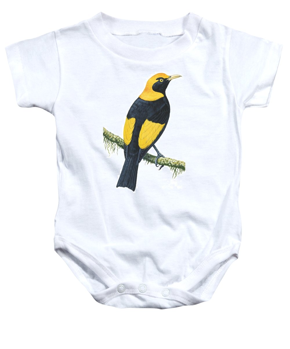 No People; Vertical; Studio Shot; Looking Away; Rear View; Full Length; Animal Themes; Nature; Wildlife; Tree; Beauty In Nature; Regent Bowerbird; Sericulus Chrysocephalus; Yellow; Bird; Perching Baby Onesie featuring the drawing Bowerbird by Anonymous