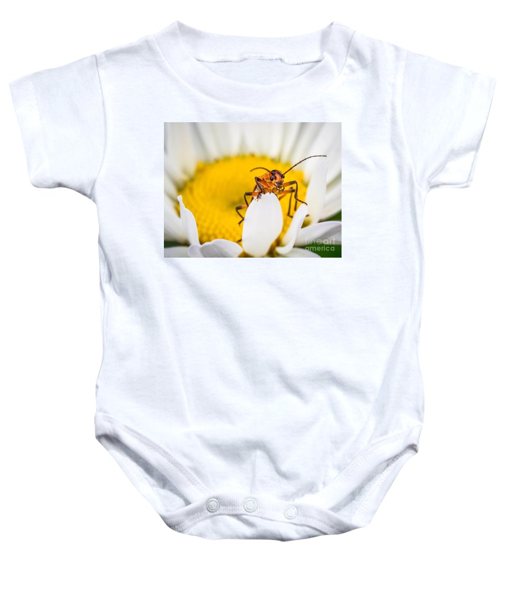 Macro Baby Onesie featuring the photograph Bug On A Daisy by Warrena J Barnerd