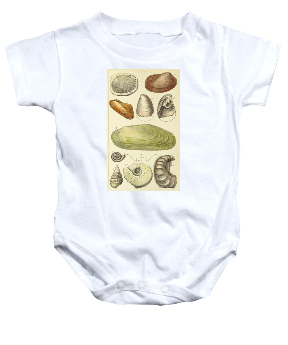 Illustration Baby Onesie featuring the photograph Devonian Fossils, Illustration by British Library