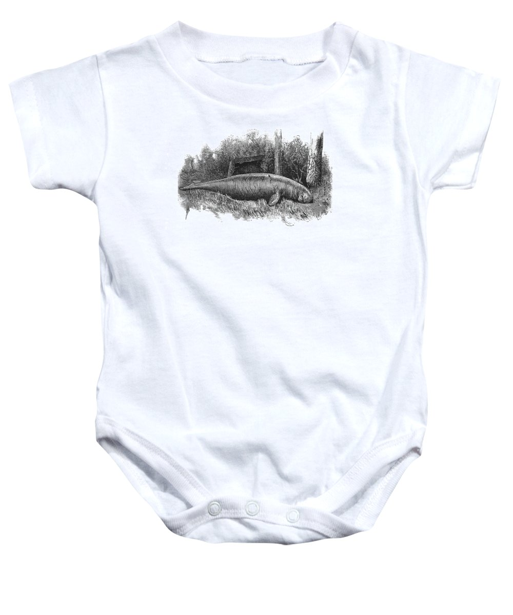 Illustration Baby Onesie featuring the photograph Dugong, Sea-cow by British Library