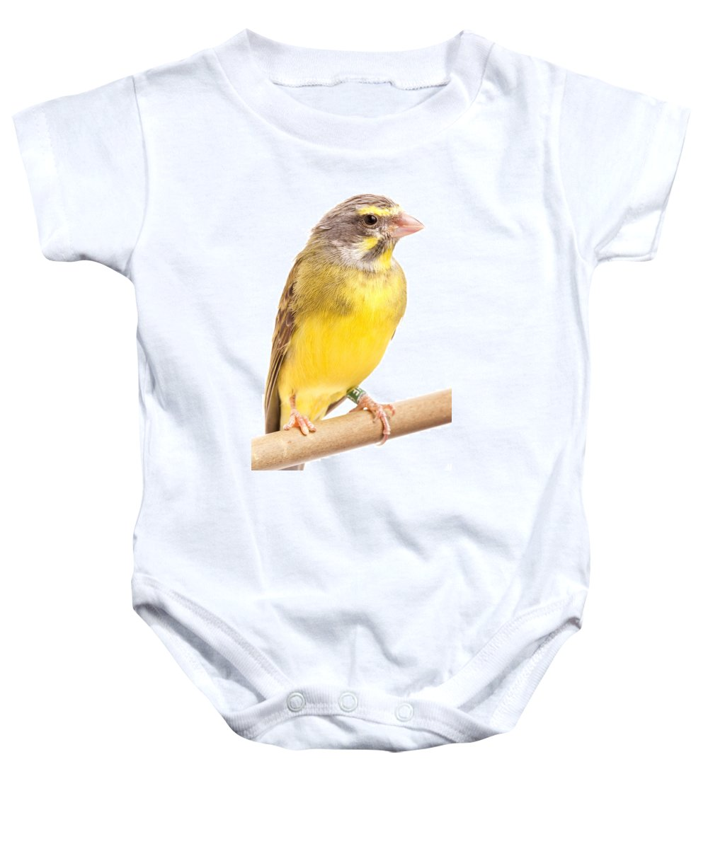 Green Singing Finch Baby Onesie featuring the photograph Green Singing Finch Crithagra Mozambicus by David Kenny