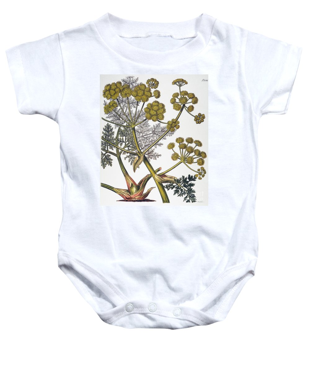 1819 Baby Onesie featuring the photograph Herbal: Fennel, 1819 by Granger