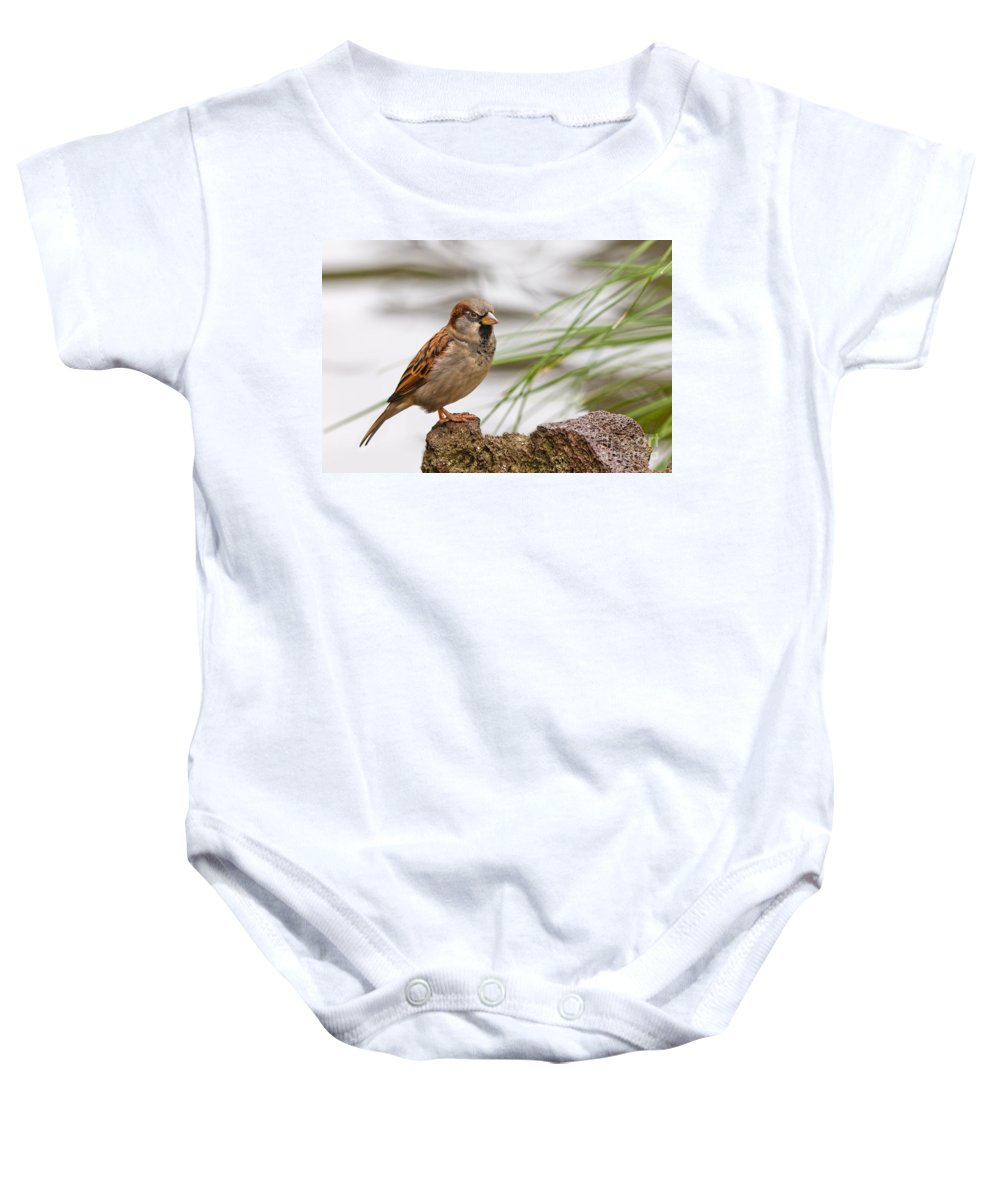 Adult Baby Onesie featuring the photograph House Sparrow Passer Domesticus On The Perch by Stephan Pietzko