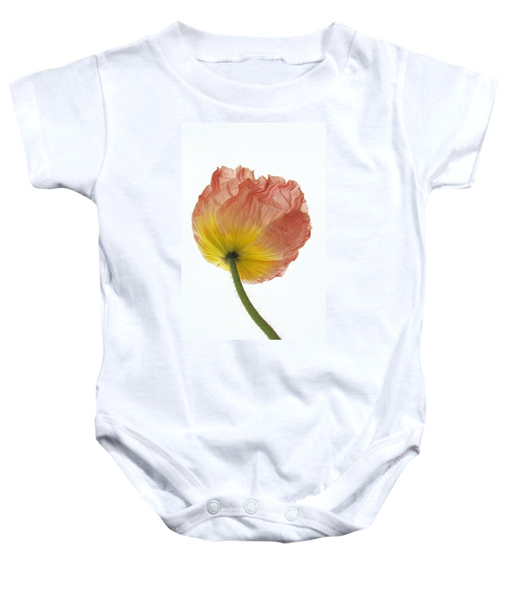Iceland Poppy Baby Onesie featuring the photograph Iceland Poppy 1 by Susan Rovira