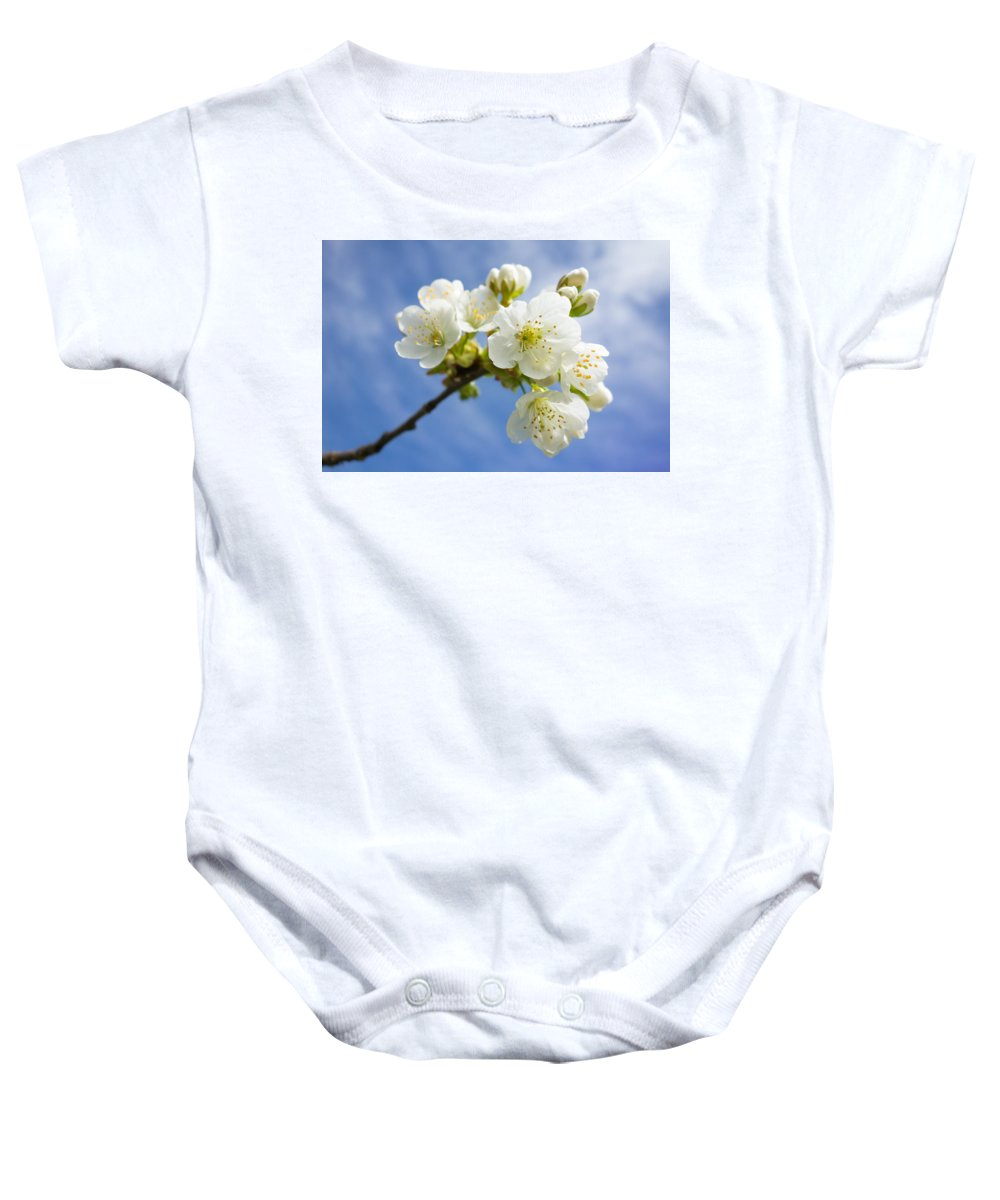 Apple Blossom Baby Onesie featuring the photograph Lovely White Apple Blossoms On Branch by Matthias Hauser
