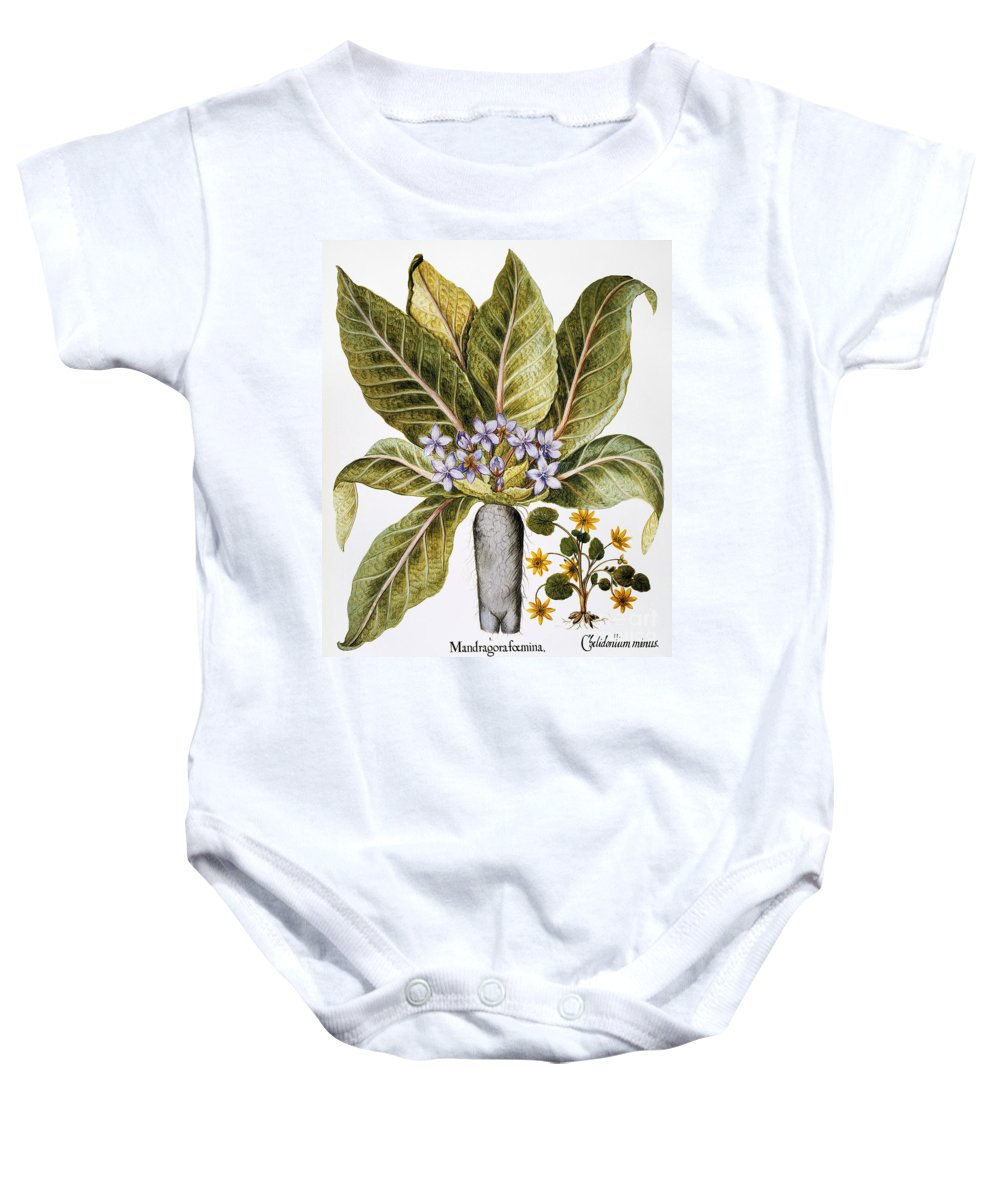 1613 Baby Onesie featuring the photograph Mandrake And Buttercup by Granger