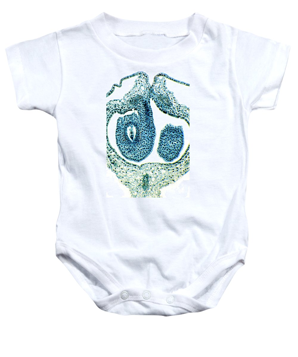 Caltha Palustris Baby Onesie featuring the photograph Marigold Flower Parts Vertical Section by Spl