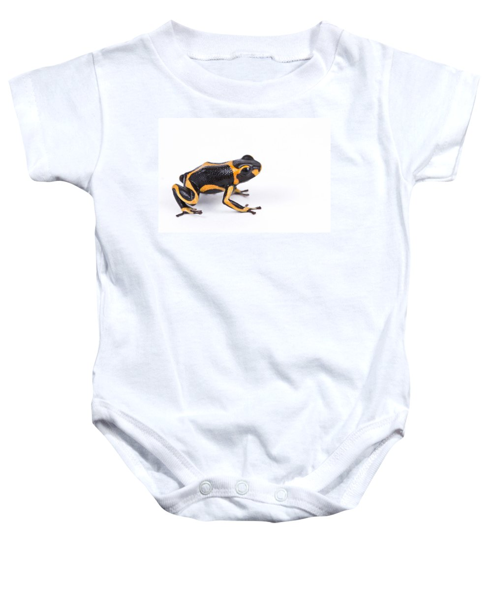 Animal Baby Onesie featuring the photograph Mimic Poison Dart Frog by David Kenny