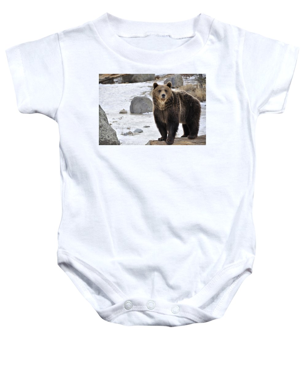 Grizzly Bear Baby Onesie featuring the photograph Montana Grizzly by Fran Riley