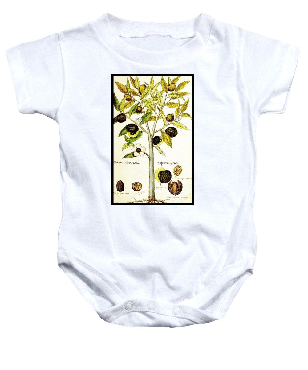 Nutmeg Baby Onesie featuring the drawing Nutmeg Plant Botanical by Rose Santuci-Sofranko