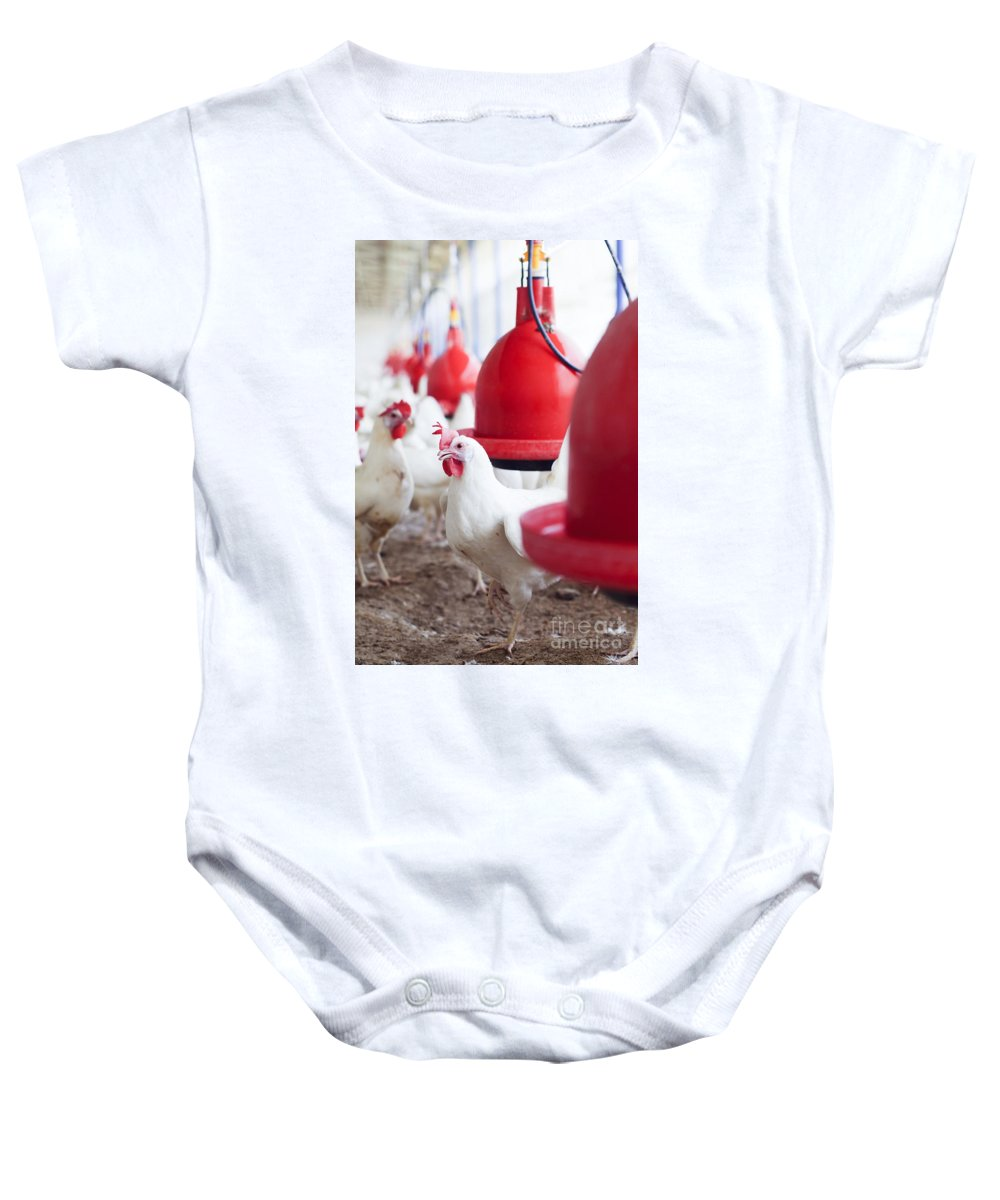 Hens Baby Onesie featuring the photograph Organic Chicken Coop by Hagai Nativ